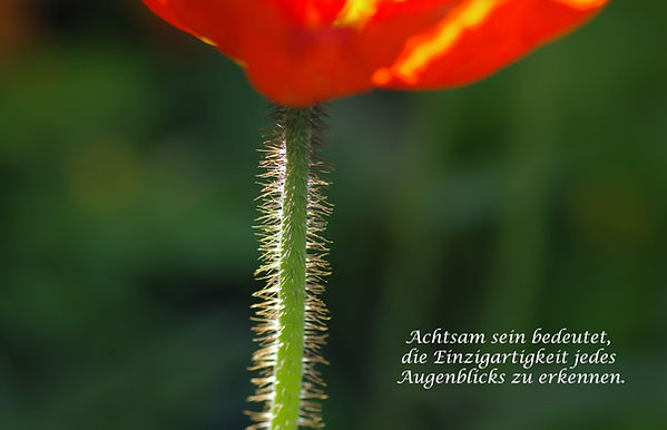 03 Stengel.jpg