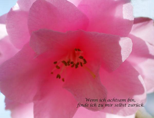 05 Rosa Blüte.jpg