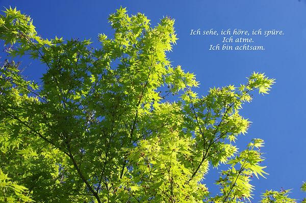 11_Grüner_Baum.jpg