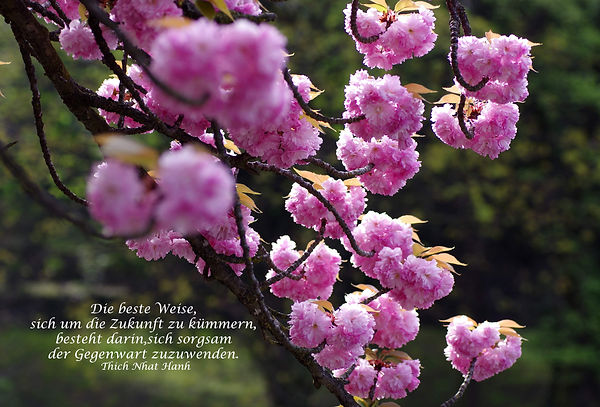 09_Kirschblüten.jpg