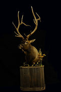 Weick's Taxidermy Unlimited Elk Mount