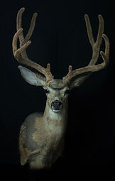 Weick's Taxidermy Unlimited Artificial Velvet Services