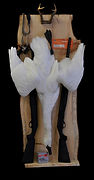 Weick's Taxidermy Unlimited Swan Mount