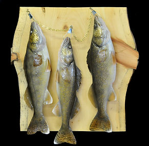 Weick's Taxidermy Unlimited Walleye Plaque