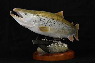 Weick's Taxidermy Unlimited Brown Trout