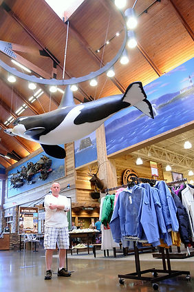 Weick's Taxidermy Unlimited Killer Whale