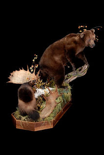 Weick's Taxidermy Unlimited Brown Bear Wolverine Life Size