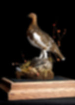 Weick's Taxidermy Unlimited Red Tail Hawk Mount