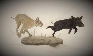 Weick's Taxidermy Unlimited Bobcat Pig Pedestal Mount