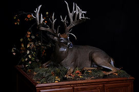 Weick's Taxidermy Unlimited Whitetail Deer Life Size