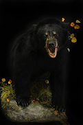 Weick's Taxidermy Unlimited Black Bear Life Size