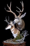 Weick's Taxidermy Unlimited Mule Deer Antelope Combo Pedestal