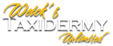 Weick's Taxidermy Unlimited Logo