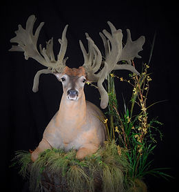 Weick's Taxidermy Unlimited Artificial Velvet Service