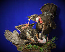 Weick's Taxidermy Unlimited Eastern Wild Turkey Mount