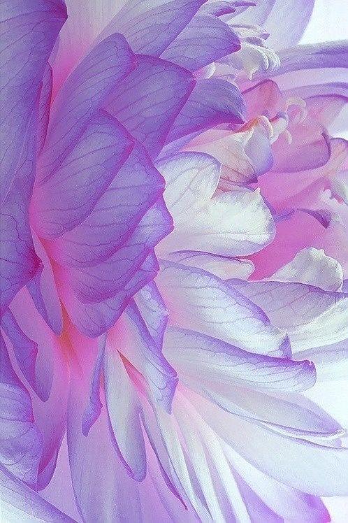 Lecture/Cosmic Heart Meditation & Webinar