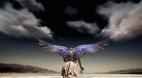 Wind Seraphim, 2019