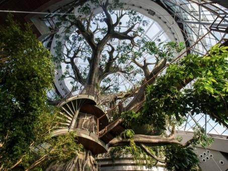 Biomimética: Inovação inspirada pela Natureza.