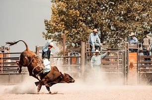Rodeo1.png