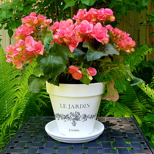 French Pot - Large