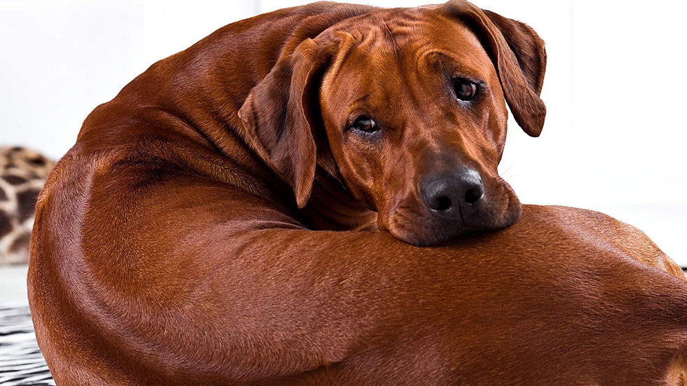 Organic & Natural Gourmet Dog Treats