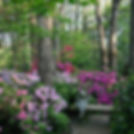 Scarbrough Haven flowers.jpg