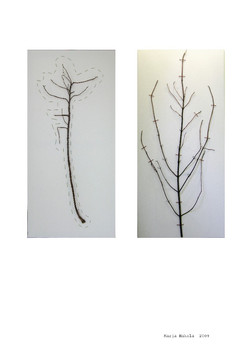 Ommellut oksat 2009 (2x65cmx30cm)