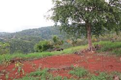 2013 Maamandala Jamaika