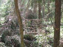 2012 Luonto