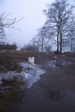 1998 Jäinen Lehmä