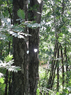 2005 Sydämet puiden rungoilla