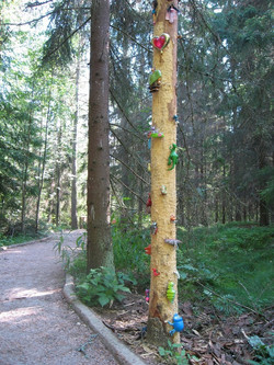 2007 Satupuu