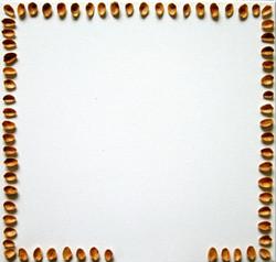 Pähkinän kuoria 2008 (40cmx40cm)