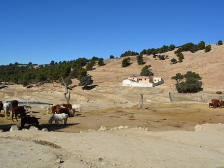 Spanien | Penàguila |Safari Aitana