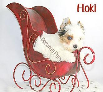 flokiIMG_1041.jpg