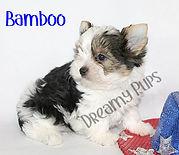 bambooIMG_3670.jpg