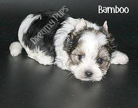 bambooIMG_3381.jpg