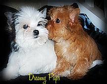 Pups 093.ba.jpg