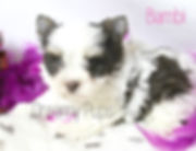bambiIMG_7533 - Copy.jpg
