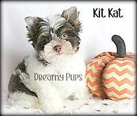 kitkatIMG_0271.jpg
