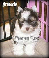 brownieMG_1684.jpg
