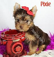 pixieIMG_0986.jpg