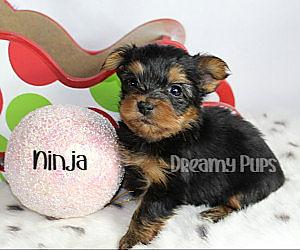 ninjaIMG_1080.jpg