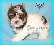knightIMG_8576.jpg