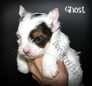 ghostIMG_2683.jpg