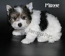 mirageIMG_2504 - Copy.jpg