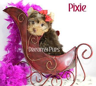 pixieIMG_1060.jpg