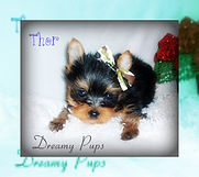 Sophie&Rolex's pups 066thor.jpg