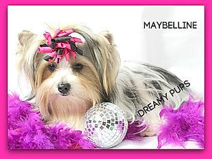 maybellineIMG_4927.jpg