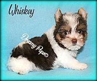 whiskeyIMG_8569.jpg